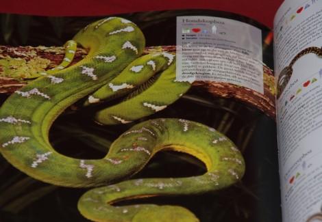 De geïllustreerde dierenencyclopedie (slang)