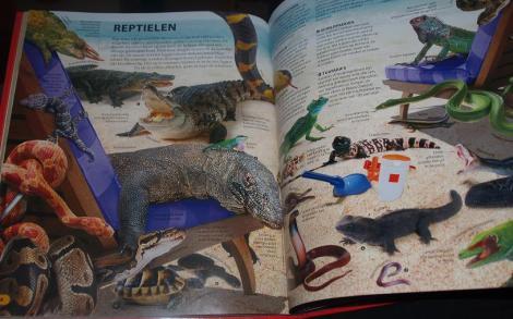 Wow! Dieren (reptielen)