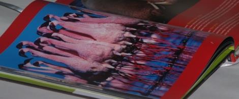 Flamingo's uit Kijk je ogen uit (Jan Paul Schutten)